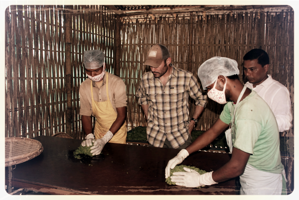 Picture: Workers Hand Rolling Green Tea in India.