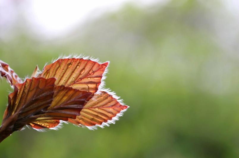 Leaf up close.jpg