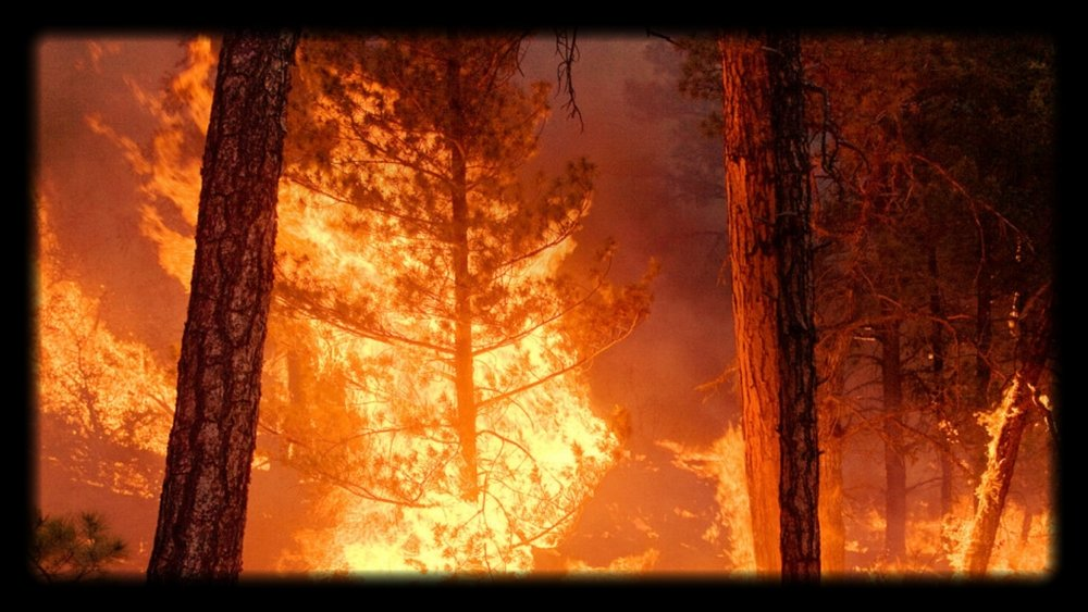Chetco Fire - 1 of 10 (7).jpg