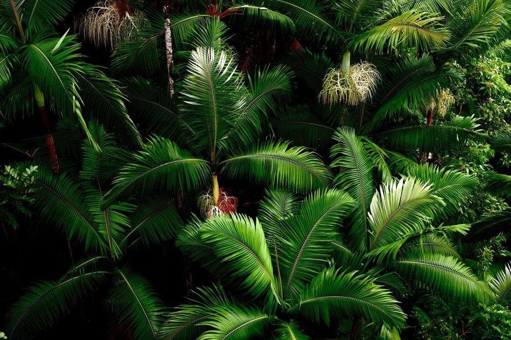 MorganMaassen_Jungle - 7.jpg