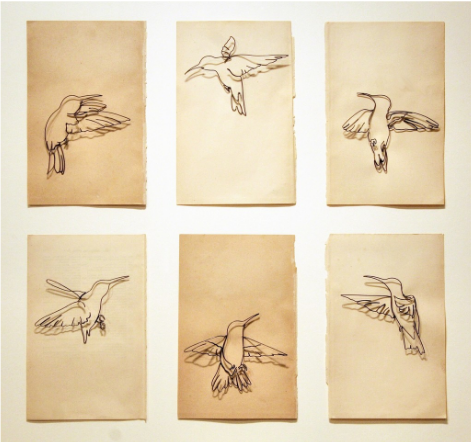 Eric Rhein 6 Hummingbirds.png