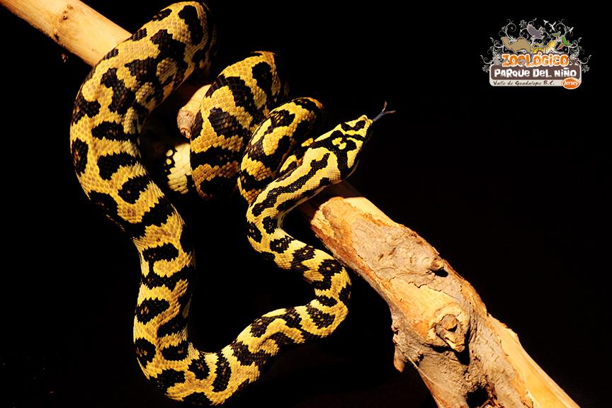 serpiente1.jpg
