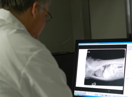 Dr. Corrigan examining a chest x-ray