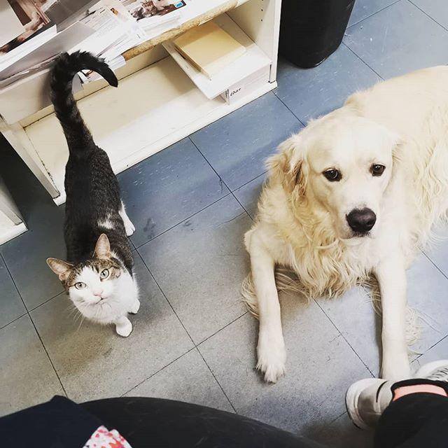 Life is better with friends, don't you think?  #vetclinicsofinstagram #vetclinic #friends #furryfriends #cat #dog #thornhillvetclinic #thornhill #wednesday #dogsofvaughan #vetclinicsofinstagram