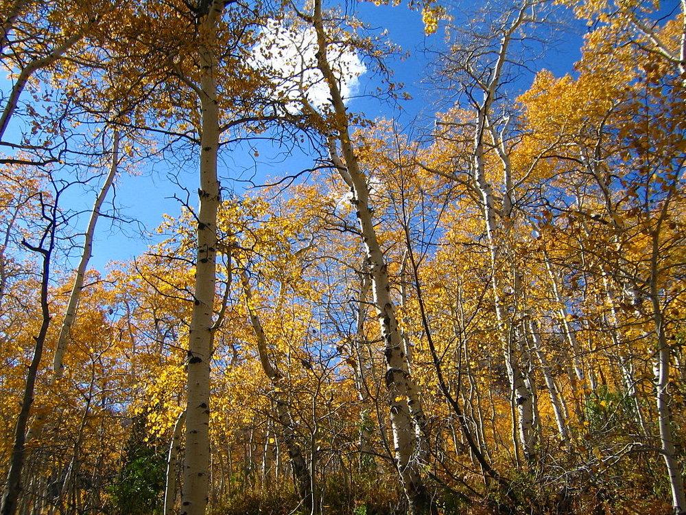1024px-October_12_2005_Alpine_Loop_Utah_United_States_2.jpg