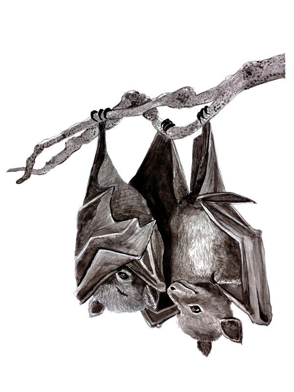 Grey_Bats.jpg