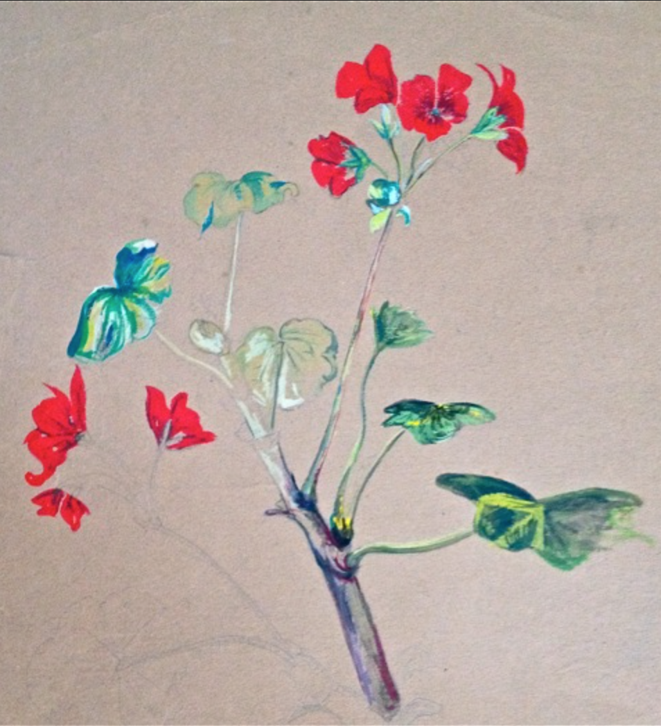 jim's painting of a geranium, which was part of the curriculum at the time in england. aged 16.