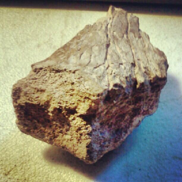 My dad found my dinosaur bone! (Taken with Instagram)