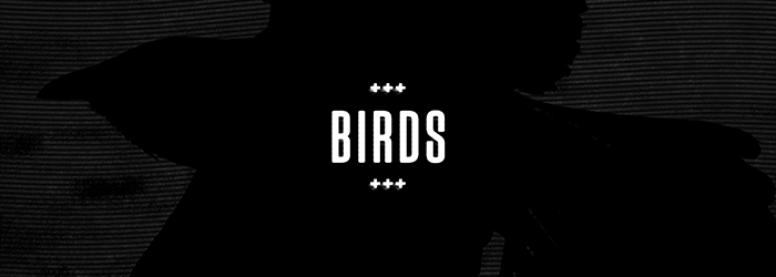 birds-blog-cover.jpg