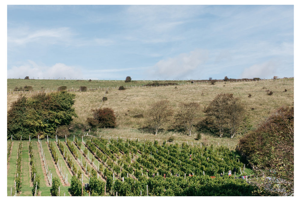A traditional English wine harvest with lunch at Breaky Bottom near Lewes, East Sussex. A great way to get involved with your local food and wine community.