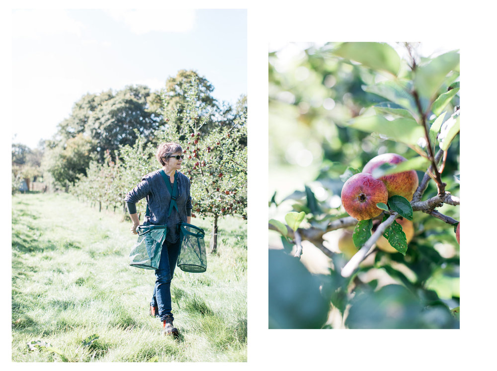 Trenchmore cider is an unfiltered cider from a farm in Cowfold, Sussex. The cider is different each year being made from the large variety of apples grown and the farm and from apples donated by local people. Photography by Sussex photographer Emma Croman.