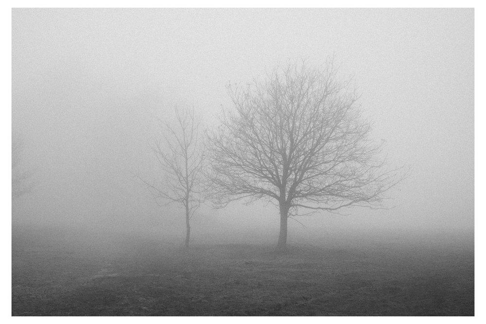 Mist_low-3062-2.jpg