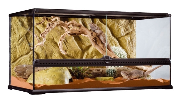 A large reptile vivarium, suitable for most snails.