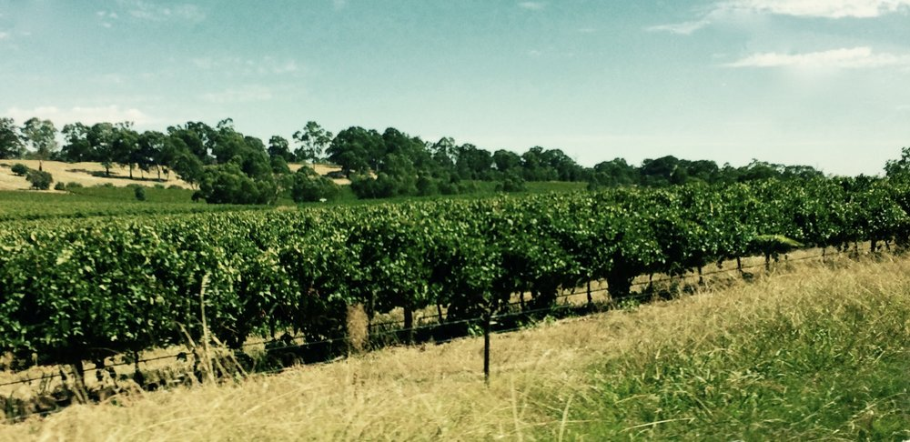 Barossa Valley - The most famous wine region in Australia. Shiraz, Cabernet Sauvignon, Merlot, Riesling, Sparkling Reds (really ??!!!), and other different grape varietals and types of wines are made in this region.