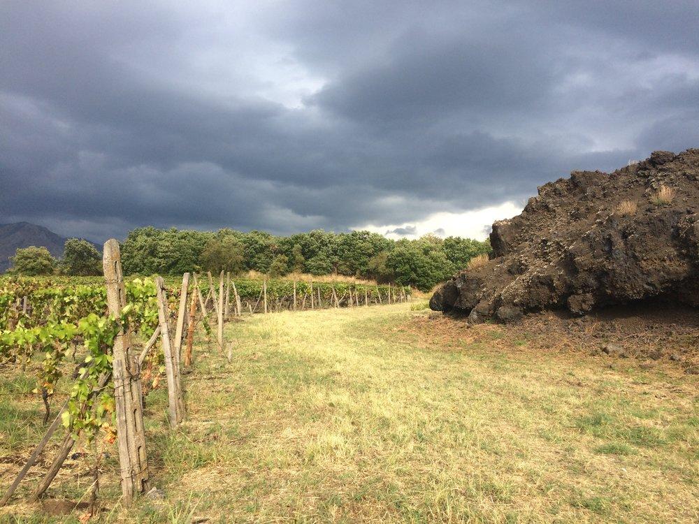 Etna vines