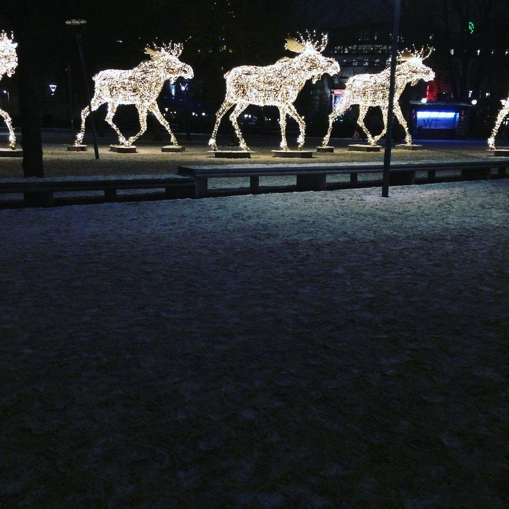 Christmas reindeers in Kungsträdgården