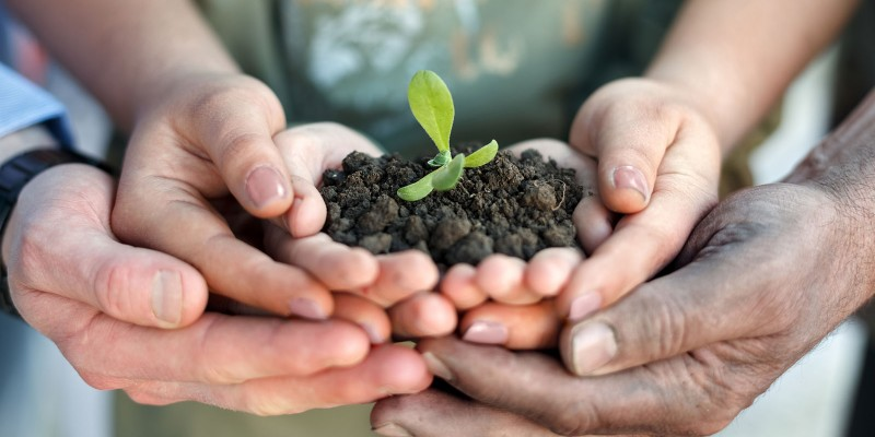 plant a seed.jpg
