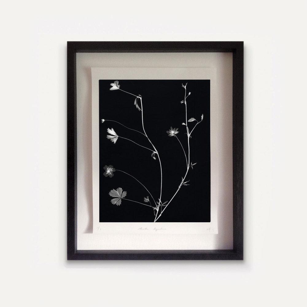William Arnold 'Suburban Herbarium'