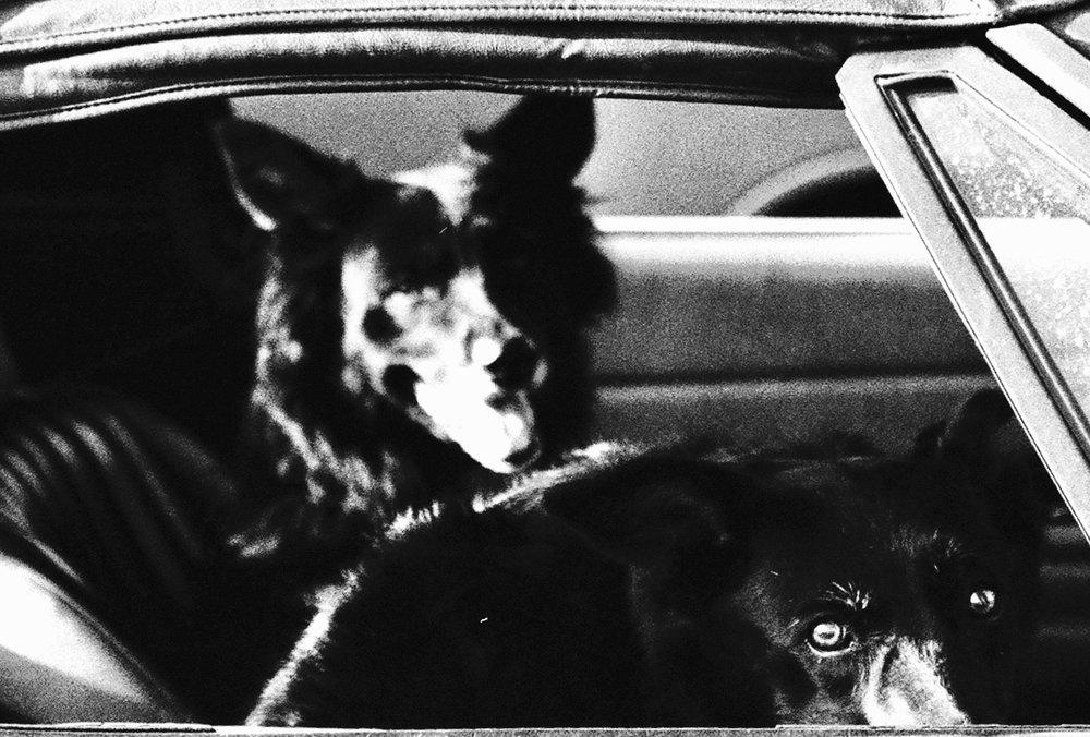 Coyote Eyes.jpg