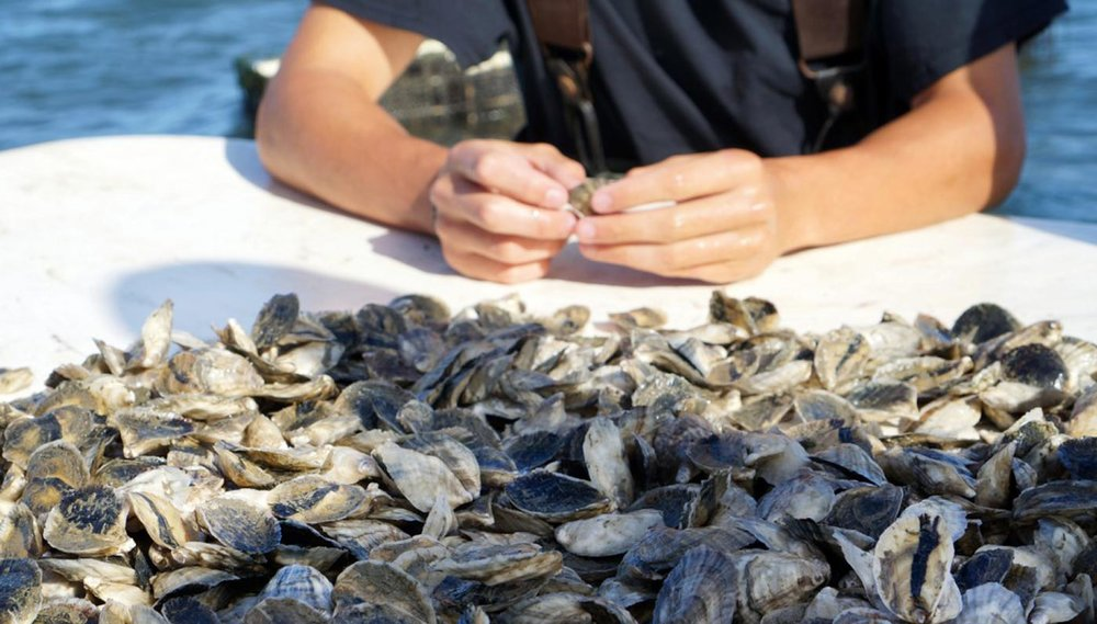 Duxbury Bay Shellfish