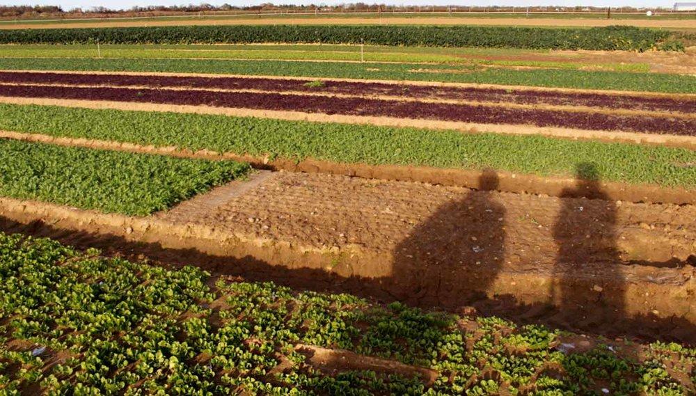 Satur Farm