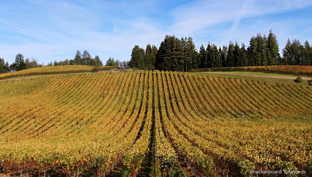 Checkerboard Vineyards