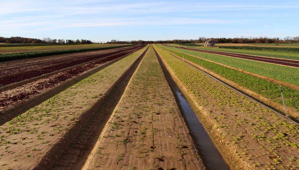 Satur Farms