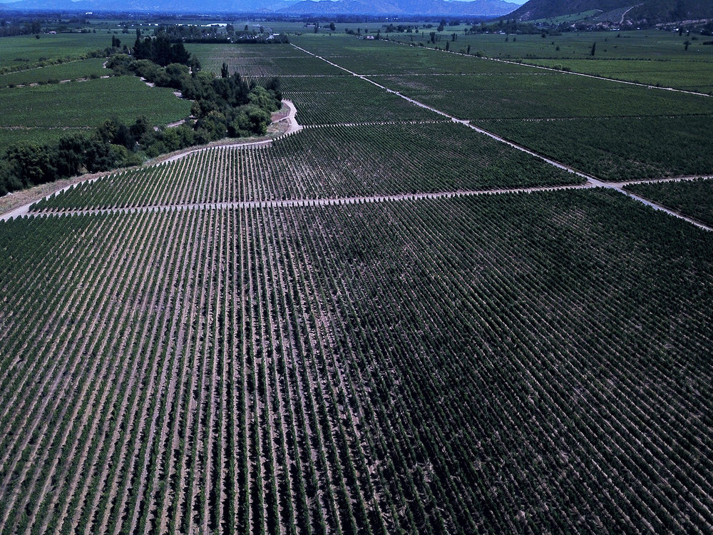 Vinyard drone photo taken by Franklin Williams of  @OutsiderSkies