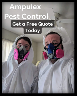 Get a Free Quote on Affordable & Guaranteed Bedbug Pest Control!