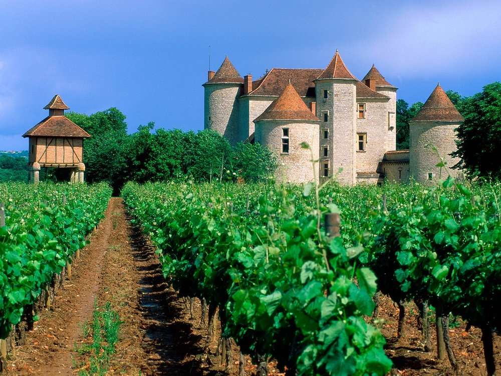 vineyard-in-the-lot-valley-france.jpg