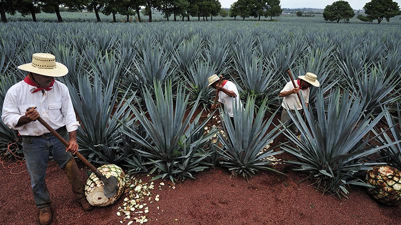 tequila-shortage-internal.jpg