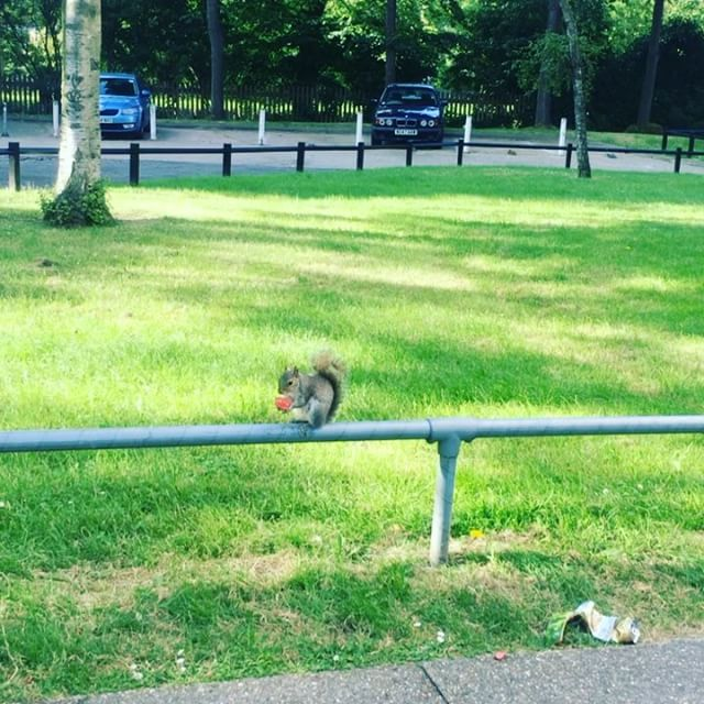 Random picture of a squirrel, but I think every blog post should have a image.
