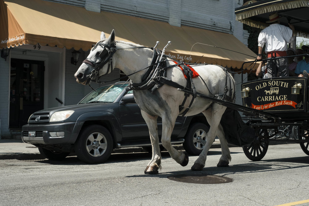 Heat is a critical issue impacting the quality of life for Charleston's carriage horses. -