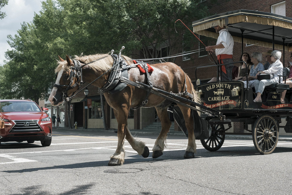 MOST EXTREME LOAD: UP TO 17 PASSENGERS TO 1 HORSE -