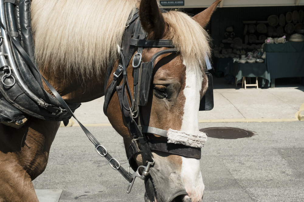 Carriage animals can be forced to work up to 10 hrs with wagon in tow. -