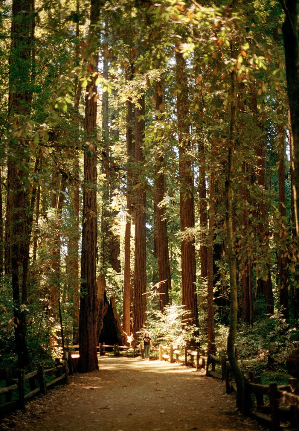 Kaya in the redwoods, Santa Cruz, CA. 2018.