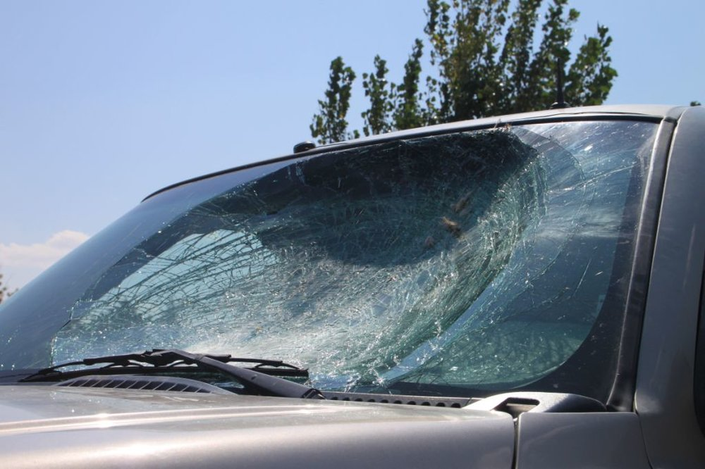 A Golden Eagle flew into this truck windshield. You can take precautions to help prevent window strikes.