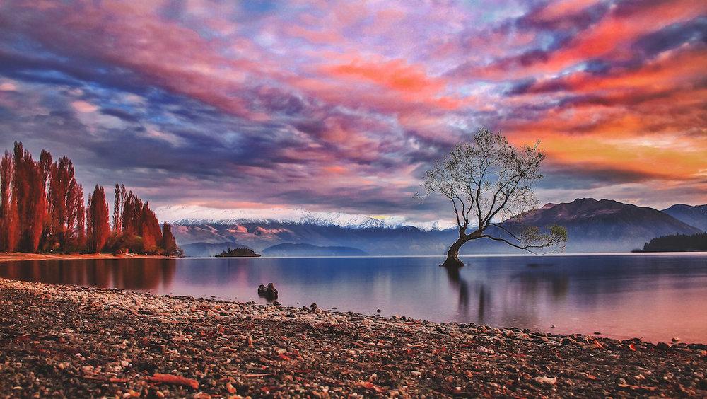 Lonely Tree - Wanaka Tree - Wanaka - Lake - NZ