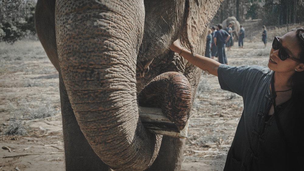 Elephant Sanctuary Thailand