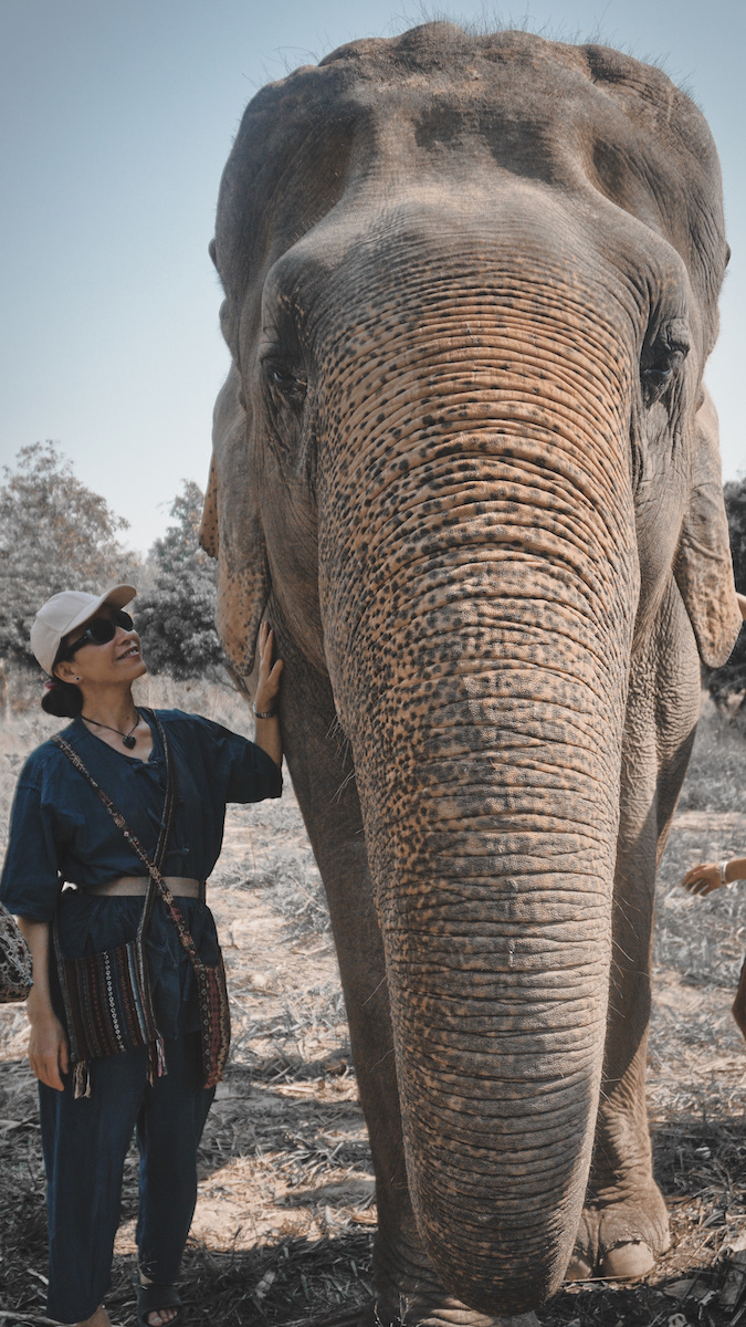 Elephant Sanctuary - Chiang Mai