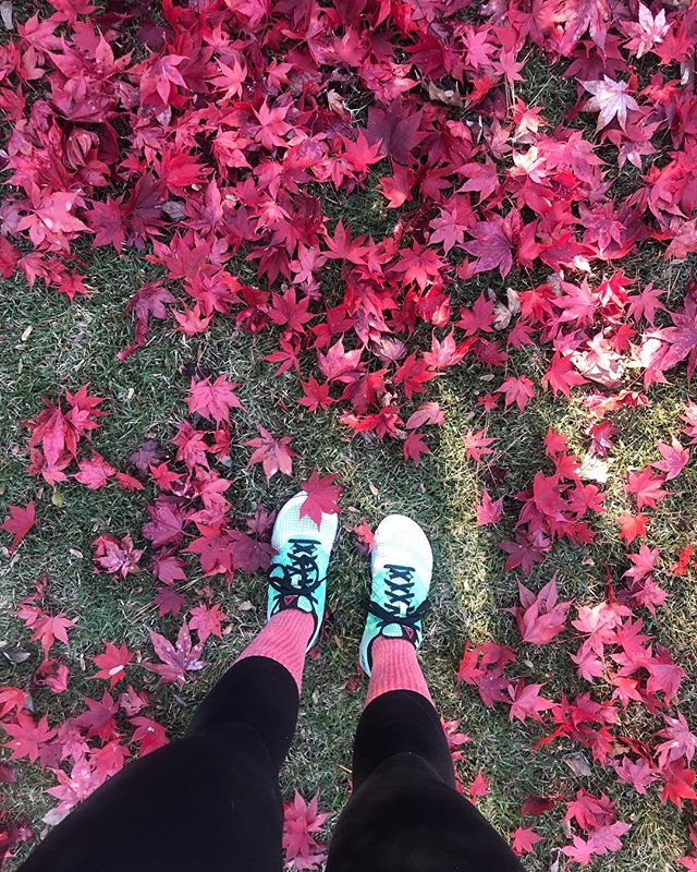 ❤️❤️❤️ There is always something to be grateful for! Today's gratitudes: My family, a great job, Warm clothes, a body that performs well(-ish) 🤣... these leaves!!!