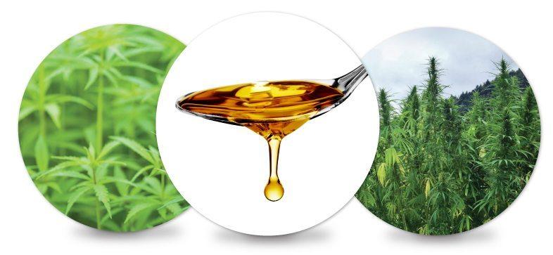 Simple_CBD_Links_Education_learn_hmbr-hemp-oil-1.jpg