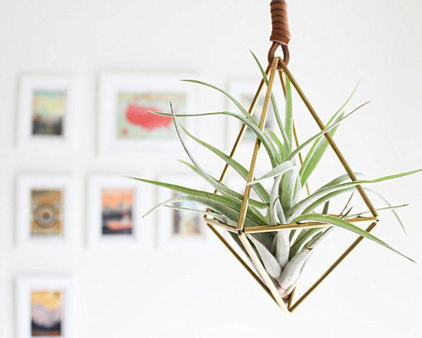 Brass-air-plant-holder.jpg