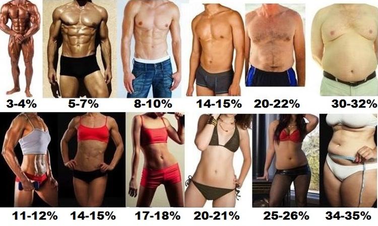 Body-Fat-Percent.png