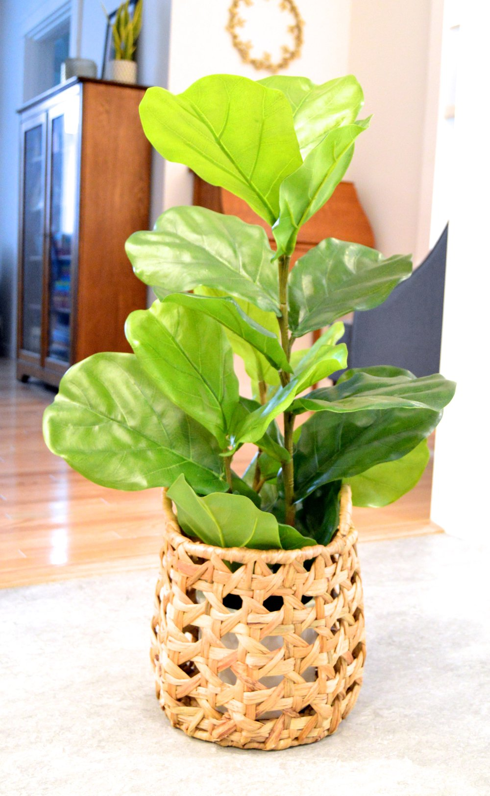 Plant Bowl Before.jpg