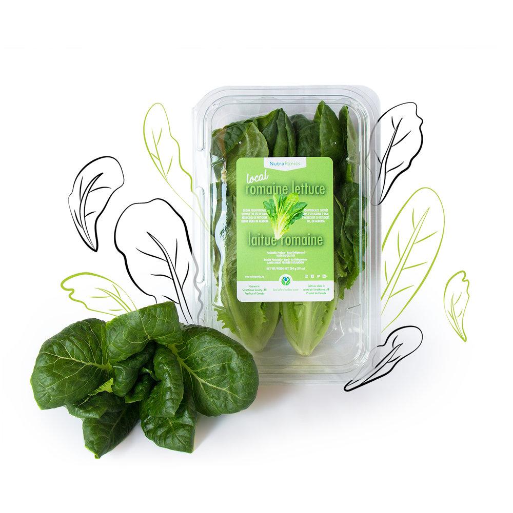 Romaine lettuce - Sweet, deep flavours!