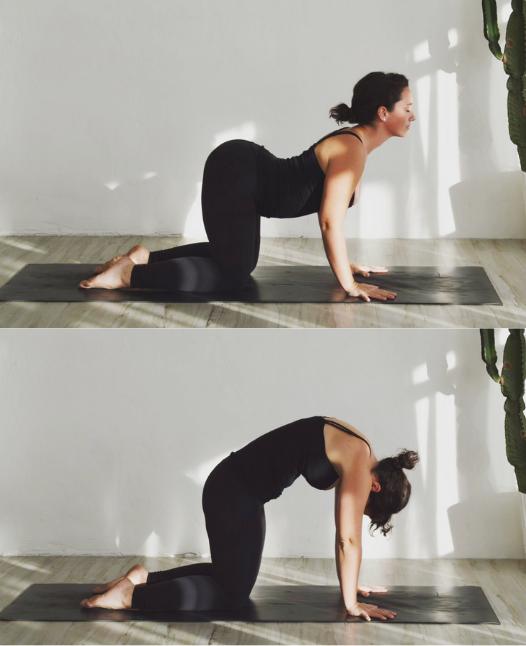 cat cow honey yoga san diego sunrise morning yoga flow.png