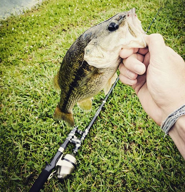 CATCH AND RELEASE. By @footejohn That's a Steinhauser. #steinhauser #notangle #tanglefree #fishing #fisherman #fishingrod #bass #bassfishing #catchandrelease