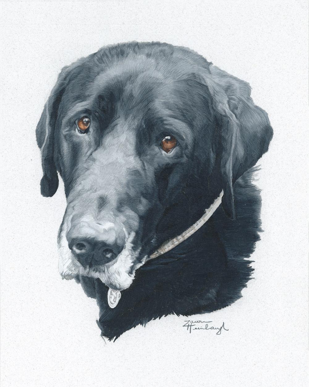 Pet Portraits — Lauren\'s Petraits