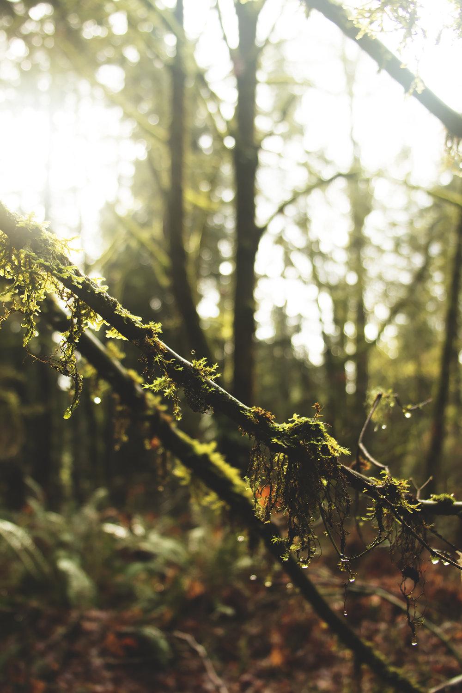 Local Seasons - Watershed Preserve, REDMOND, WA